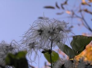 vegetal-hairdo-by-andrei-ghergar