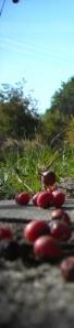 'Rowanberries' by michalina 1