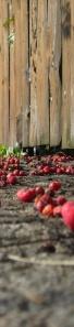 'Rowanberries' by michalina 2
