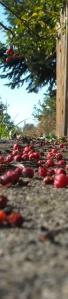 'Rowanberries' by michalina 3