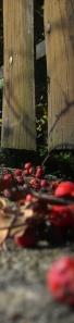 'Rowanberries' by michalina 4